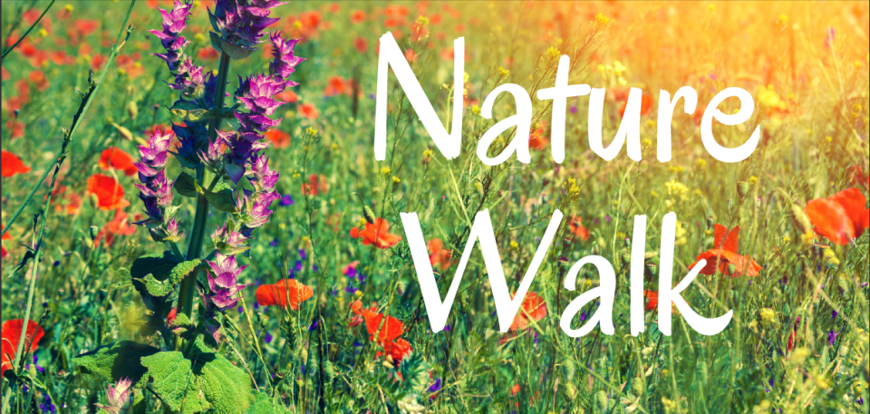 nature walk image