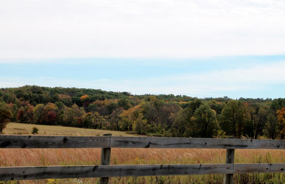 Griggstown Native Grassland Preserve (16)