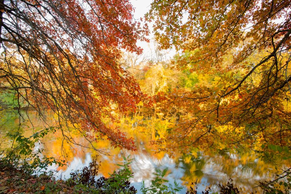 Fall Colors_DR Canal_NSingh